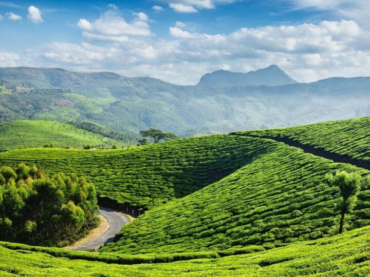 Sustainability Practice in the Tea Industry